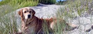 Urlaub mit Hund an der Ostsee