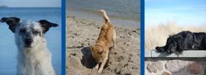 Urlaub mit Hund Hundestrand Kühlungsborn