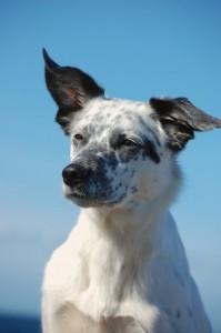 Hundestrand Ostsee