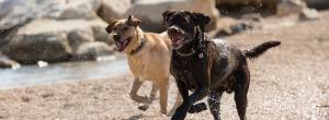Hundestrand Usedom