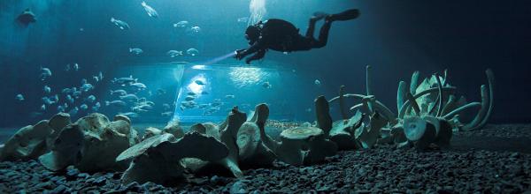 familienurlaub-an-der-ostsee-ozeaneum