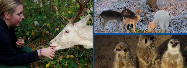 Tierpark Wolgast Rehe und Erdmännchen