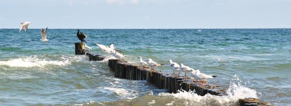 Fischen in der Ostsee