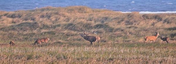 Tierwelt auf der Halbinsel © Bünn