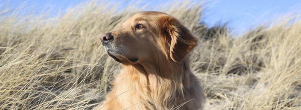 Urlaub an der Ostsee mit Hund