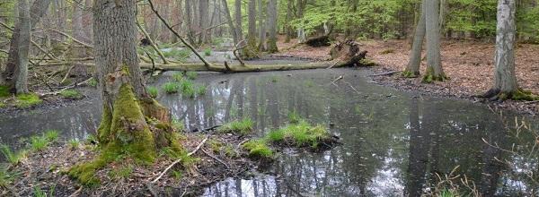 Verwunschener Wald © Bünn